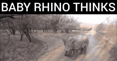 Baby Rhino thinks he's a goat!!?